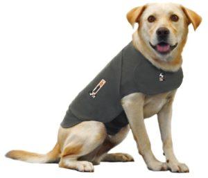 Dog in Thundershirt